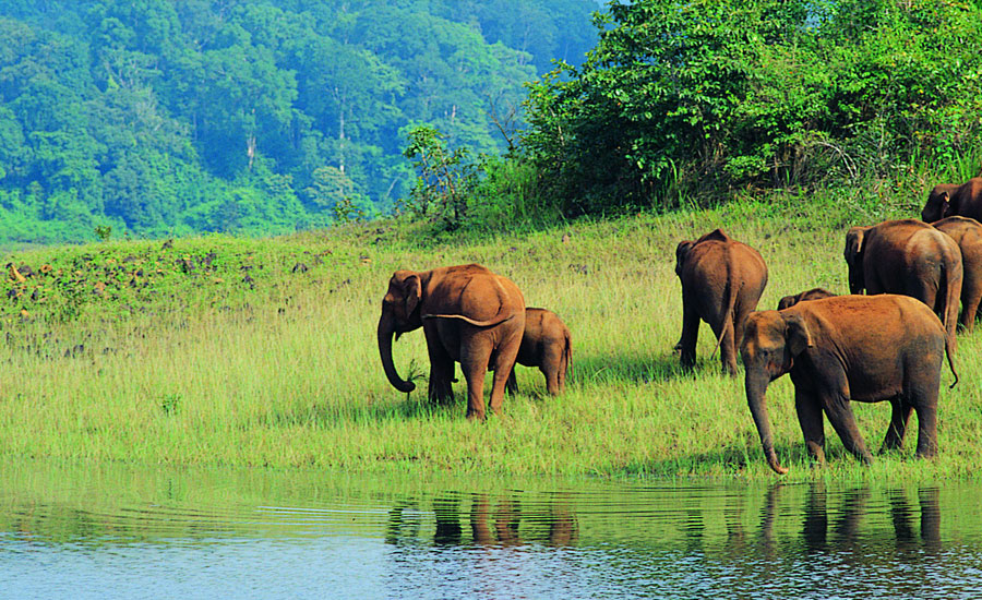 best kerala holiday tour packages from bangalore, india
