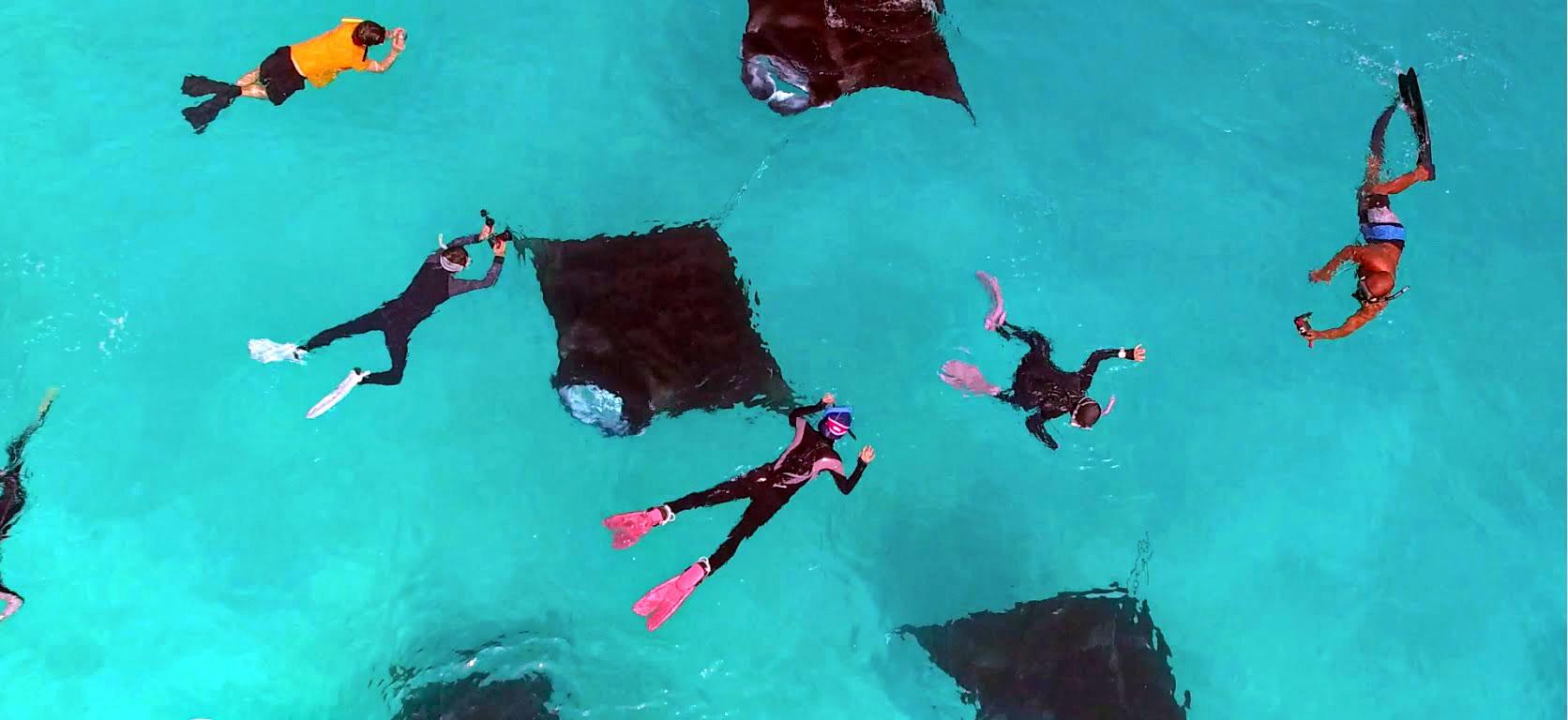 Visit Manta rays (Hanifaru bay) Maldives from Bangalore, INDIA