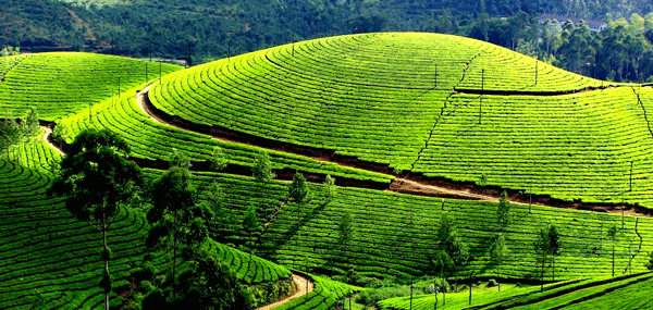 Ooty | South India tour packages from Bangalore, Karnataka, India